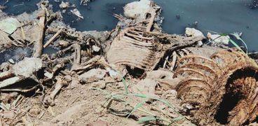 العثور على 100 حمار نافق في المنوفية