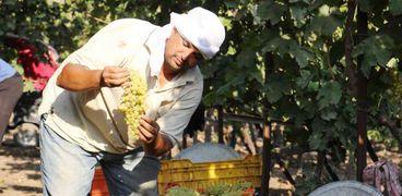 يدعم مناعة الجسم ويحارب السرطان..تعرف علي فوائد وأضرار عصير العنب