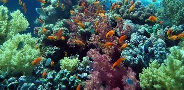محميات البحر الاحمر