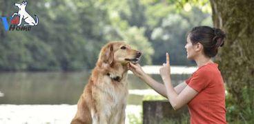 دورات تدريبية لتأهيل الكلاب سلوكيا ونفسيا.
