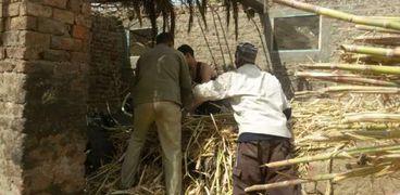 أصحاب العصارات فى نجع حمادى يشكون من عدم تطوير صناعة «العسل الأسود»