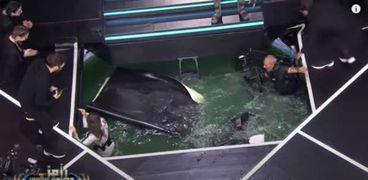 لحظة سقوط المصور في المياه