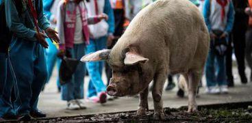 """""""تشو"""" الخنزير القوي في الصين"""