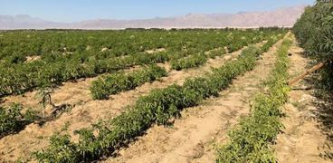 الزيادة السكانية تلتهم نصيب الفرد من الرقعة الزراعية في مصر