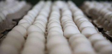 أسعار البيض اليوم في بورصة الدواجن: أعلاها «البلدي»