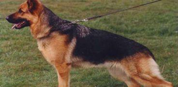 كلب بوليسي - أرشيفية