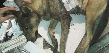 قتل الكلاب جريمة مستمرة
