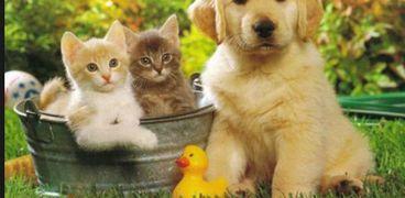 العثور على أجسام مضادة لكورونا لدى القطط والكلاب