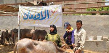 الأورمان توزع 4787 رأس ماشيه على الأسر الأكثر احتياجا بسوهاج