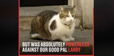القط لاري