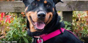 الكلب لولو تم يخضع لإعادة تأهيل بسبب صراخ وتوبيخ مالكه له.