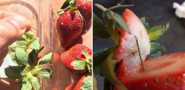 زراعة  الفراولة في البيت