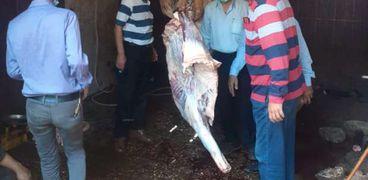 ضبط الجزار وذبحه خارج السلخانة