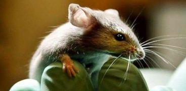ولادة فئران في الفضاء