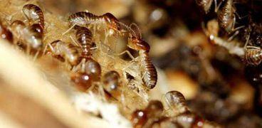 سر سير النمل للخلف