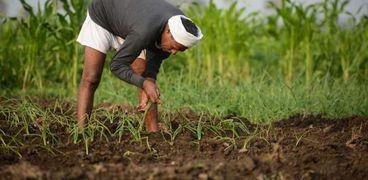 نقص الاسمدة يهدد محصول القمح