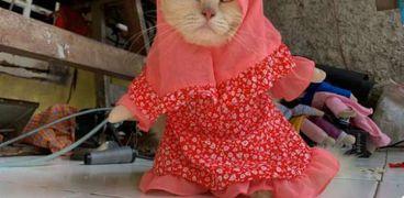 مدرس يترك وظيفته ليتجه إلى مجال تصميم أزياء القطط