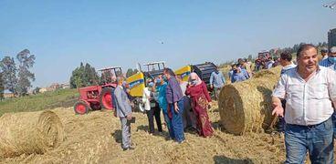 استغلال قش الأرز والقضاء على السحابة السوداء في كفر الشيخ