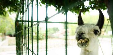 إغلاق حديقة حيوان الإسكندرية بأعياد الربيع