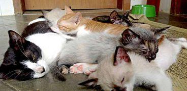تمكنت فرقة من المتطوعين من انقاذ أكثر من ألف حيوان أليف