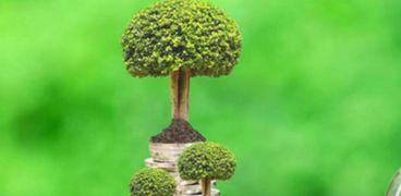 الاقتصاد الاخضر يحقق بيئة نظيفة وصحية