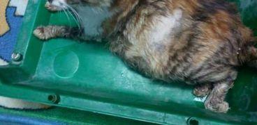 مقطع فيديو لتعذيب قطة يثير الجدل