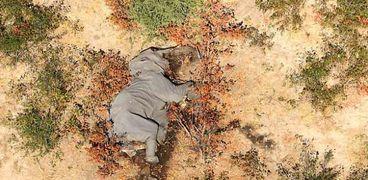 أفيال بتسوانا الميتة