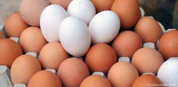 ثبات أسعار البيض في المحلات بالرغم من انخفاضها في المزارع