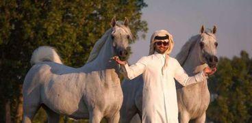 مهرجان الخيول العربية