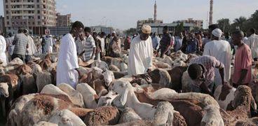 سودانيون يشترون أضاحي العيد