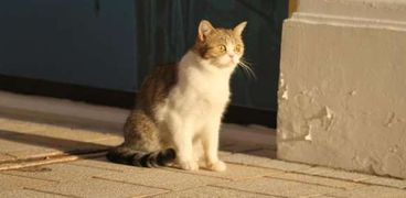 «خالد مغتصب القطط» هاشتاج يتصدر مواقع التواصل في غضب شديد: اعدموه