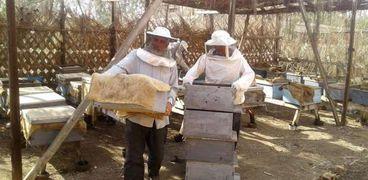 جنى عسل النحل