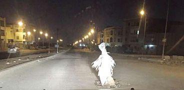 خيال مآتة يتوسط أحد الشوارع فى «النزهة»