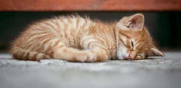 دراسة حديثة: فيروس كورونا ينتقل للحيوانات الأليفة أكثر مما كان يُعتقد