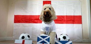 على طريقة الأخطبوط بول.. كلب يتنبأ بنتيجة لقاء إنجلترا