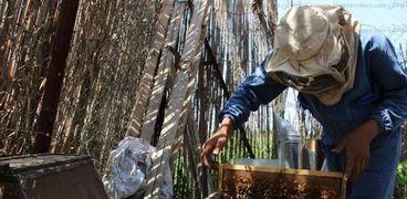 تجارة وإنتاج النحل يواجهان مشاكل عديدة