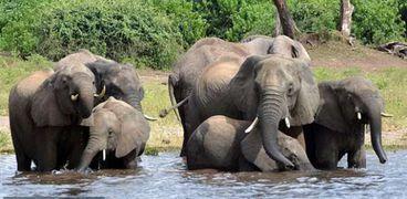 """هلاك 6 أفيال لإنقاذ """"فيل رضيع"""""""