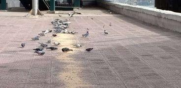 """حملة لمنع صيد الطيور فى """"الزمالك"""""""