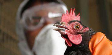 """لمناعة كلمة السر..""""بيطري"""" يضع روشتة الوقاية من أنفلونزا الطيور H5N8 بعد إكتشاف أول حالة إصابة بشرية"""