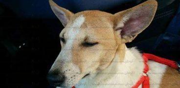 صورة لأحد الكلاب داخل التاكسي