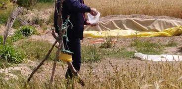 المرور على محصول القمح