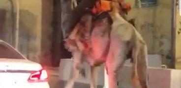 الصورة المثيرة للجدل في مكة المكرمة