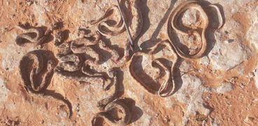 الثعابين التى تم قتلها داخل بئر رومانية غرب مطروح