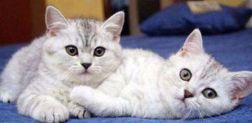 تقديم القطط كوجبات في الصين