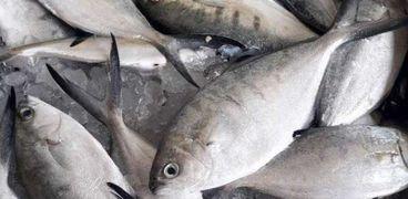 تعرف على أسعار السمك اليوم السبت 10 يوليو 2021