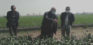 """""""الزراعة"""" تطمئن على الحالة المرضية للقمح فى محافظة بنى سويف"""