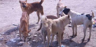 كلاب- صورة أرشيفية