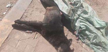 إعدام الكلاب بالسم في بني سويف يثير جدلا على مواقع التواصل الاجتماعي