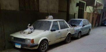 انتشار الكلاب الضالة في الشوارع خطر يهدد أرواح المواطنين