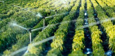 حذر خبراء من أن جزيئات البلاستيك يمكن أن تتسلل من البيئات الأرضية إلى الأنسجة النباتية